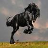 black-horse-puzzle-1