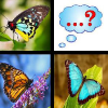 butterfly-memory-match