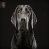 cute-black-dog