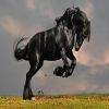 black-horse-puzzle