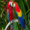 parrots-jigsaw-puzzle